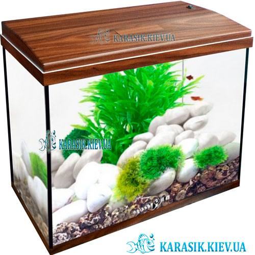 Aquarium rectangle nut Karasik kiev