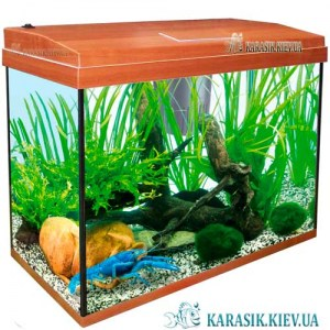 Aquarium-rectangle-Apple-karasik