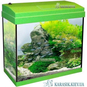 Aquarium-rectangle-Salat-Karasik-kiev-3